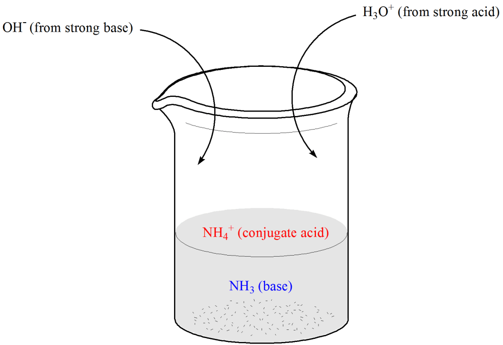 medium resolution of illustration of beaker containing weak base nh3 and its conjugate acid ammonium ion