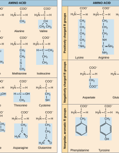 Amino acid polarity chart also mersnoforum rh
