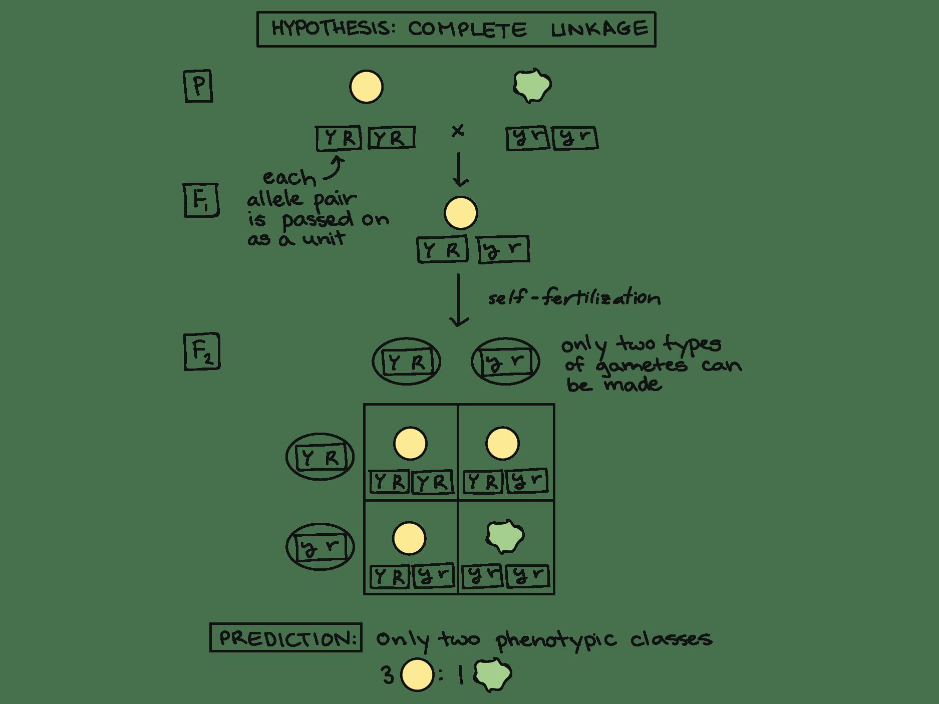 Segregation Diagram