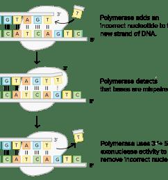 dna replication diagram labeled [ 2550 x 1349 Pixel ]
