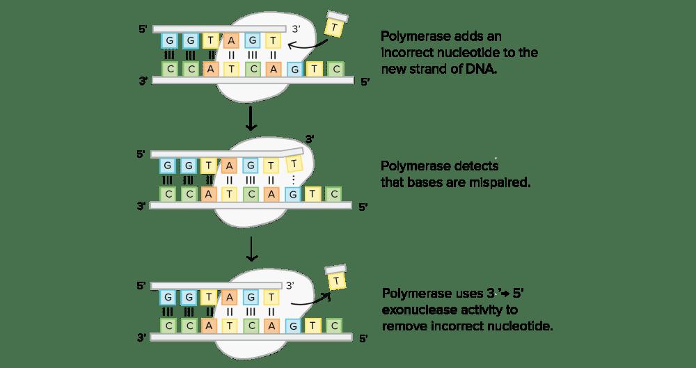 medium resolution of label dna diagram