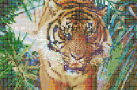 Sumatran Tiger - Framed Mosaic Wall Art