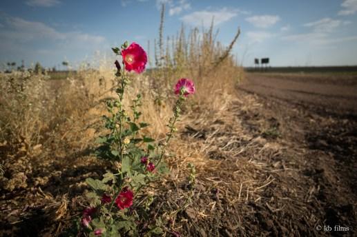 Farm Flower - Crooked Sky Farms