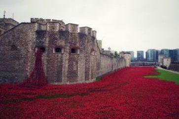 """I Storbritanien er valmuen blevet det store, fælles symbol på soldaten - et lån fra John McRaes berømte digt """"In Flanders Fields"""". Her er Tower of London udsmykket med håndlavede keramik-valuer på Armistice Day 2014. Der er én for hver faldne britiske soldat."""