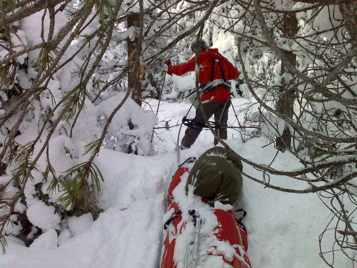 Tett skog og dyp snø