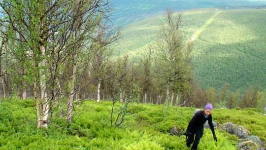 Marianne går opp den bratte lia mot Torsvikkollen.