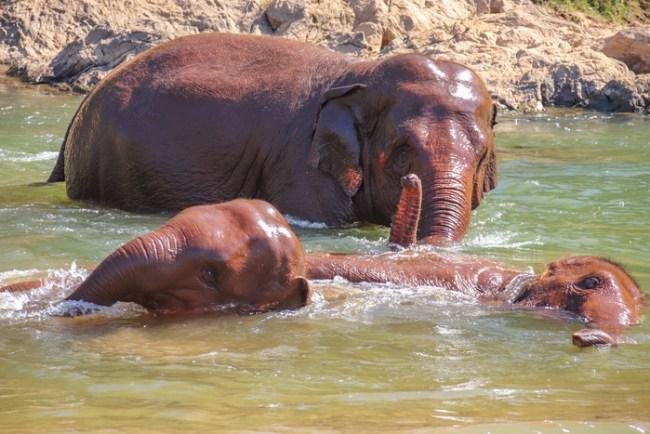 olifanten sanctuaries in Thailand