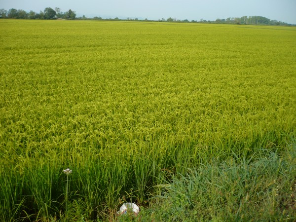 Agriculture : autosuffisance alimentaire montre-toi, enfin !