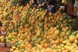 Kankan : Les délices de la mangue sont source de Diabète et d'obésité !