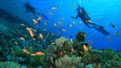 Halmahera Selatan Surga Pecinta Diving dari Seluruh Dunia