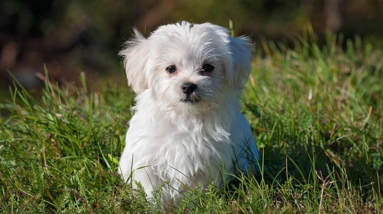 Investasi di Dogecoin Cocok