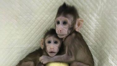 monyet kloning lahir di Cina