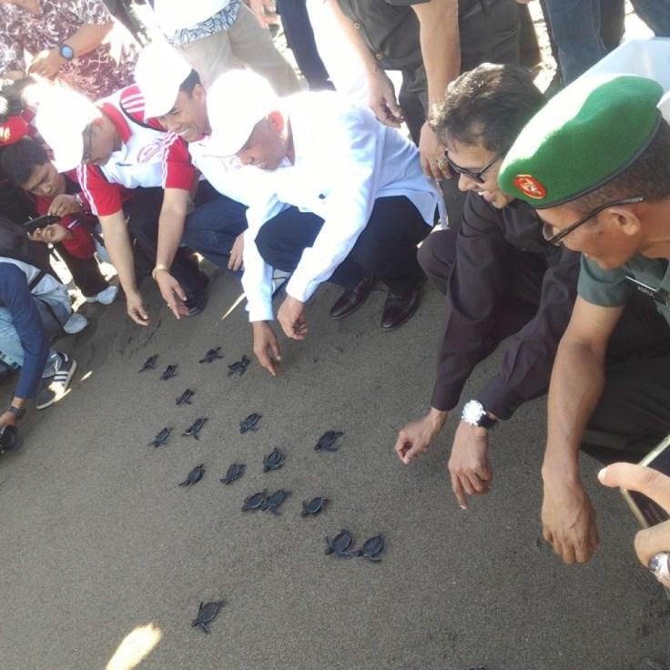 Gubernur Sumbar, Walikota Padang dan Wakil Ketua DPRD Padang melepas 300 ekor Penyu di Muara Lasak, Pantai Padang. Foto : Istimewa