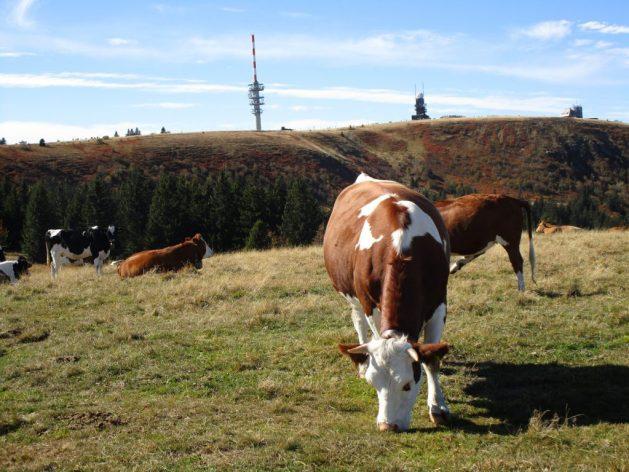 Der Feldberg ist mit 1493 Metern der höchste Berg im Schwarzwald und der zweithöchste Berg nach Ländern.