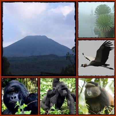 Mgahinga-Gorilla-Park-Many-Activities.jpg