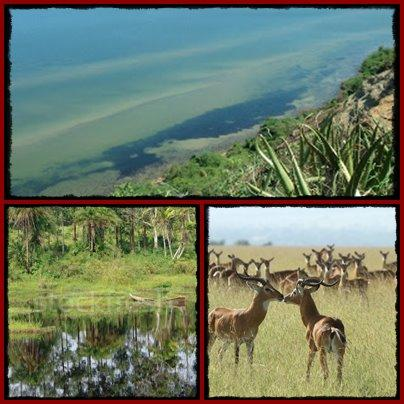 Top Things to do and see Kabwoya Wildlife Reserve