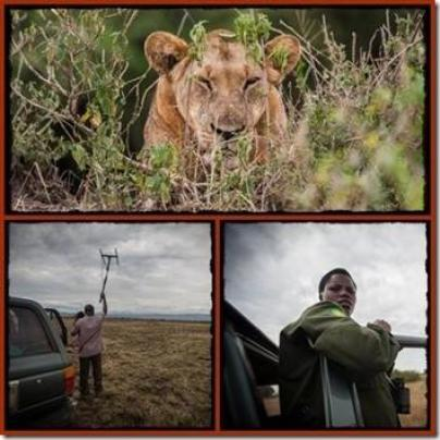 Lion Tracking Research