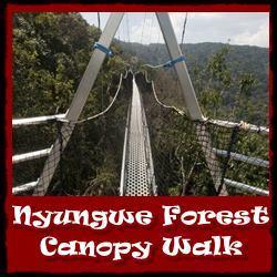 Nyungwe-Forest-Canope-Walk