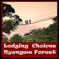 nyungwe-forest-lodging-choices