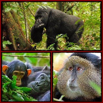 Fly from Arusha or Nairobi - Trek Gorillas in Uganda or Rwanda