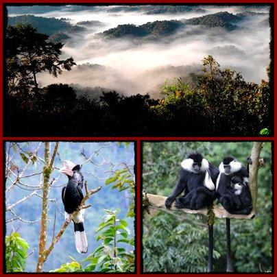 Nyungwe-Forest-Trails