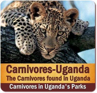 Carnivores found in Uganda