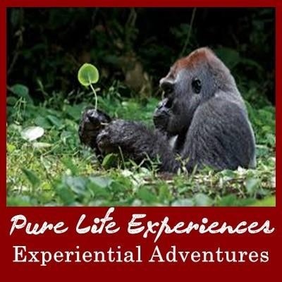 10 Habituated Gorilla Groups - Volcanoes National Park-Rwanda