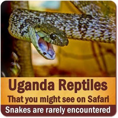 Reptiles found in Uganda