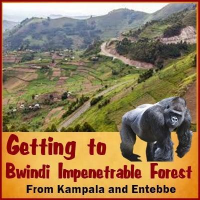 7 Day Gorilla - Chimpanzee Trekking - Wildlife Safari in Uganda