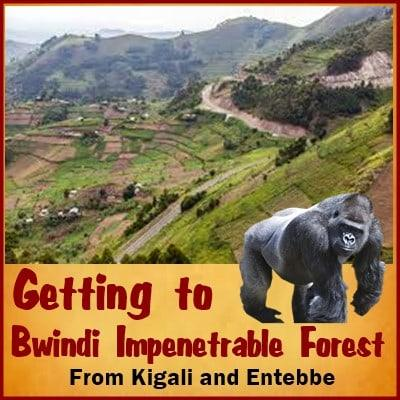 Best Ways of Getting to the Southern Area of Bwindi Impenetrable Forest