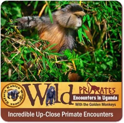 The Best Park for Golden Monkey Trekking in East Africa