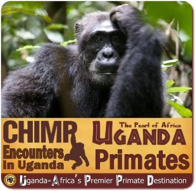 the Best Chimpanzee Trekking