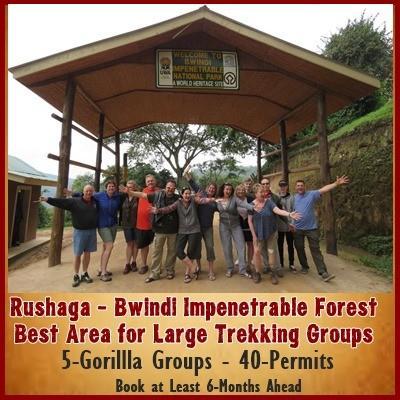 Planning a Gorilla Trekking Safari for your Group