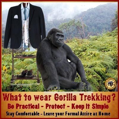 How to prevent Wasp Attacks  while Gorilla Trekking in Uganda
