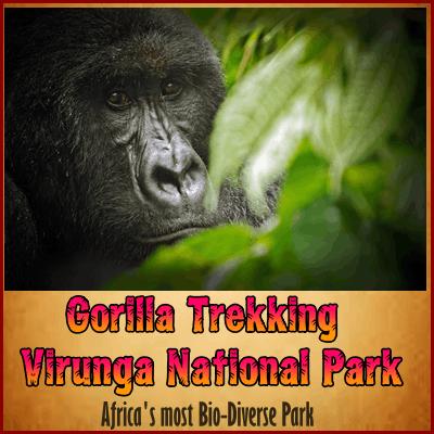 Gorilla Trekking Safaris in Virunga National Park