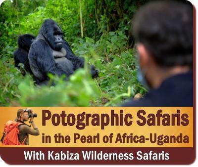 The Best Private Photographic Safaris in Uganda