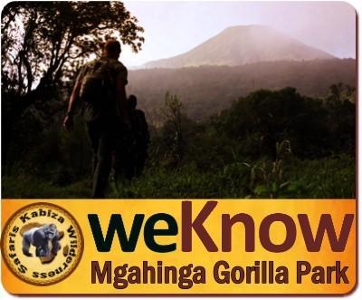3-Day Luxury Gorilla Trekking Safari in Mgahinga Gorilla Park-Uganda