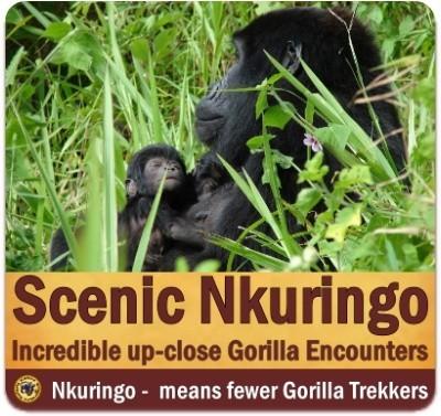 The Scenic Nkuringo Region of  Bwindi Impenetrable Forest