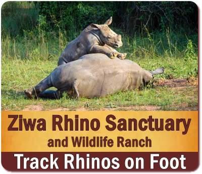 Rhino tracking - Ziwa Rhino Sanctuary-Home to the Rhinos of Uganda