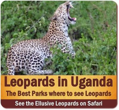 Best Places to see Leopards