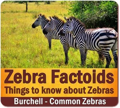 Best Places to see Zebras
