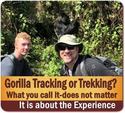 Call it Gorilla Tracking or Trekking