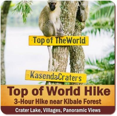 Top Things To Do and See in Kibale Forest National Park