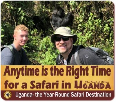 When is the Best Time of the Year for Gorilla Trekking in Uganda?