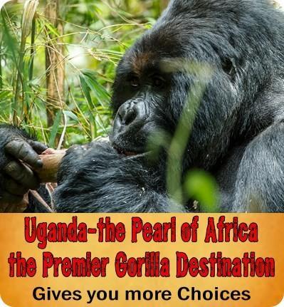 1500 USD Gorilla Permits in Rwanda - Your Options