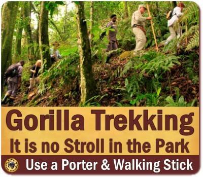 Gorilla Trekking Fitness - Am I fit enough for a Gorilla Trek?