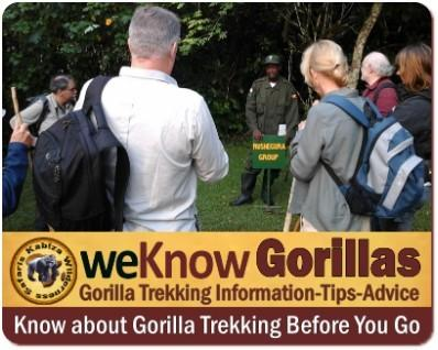 What should I wear for Gorilla Trekking? What Gear should I bring?