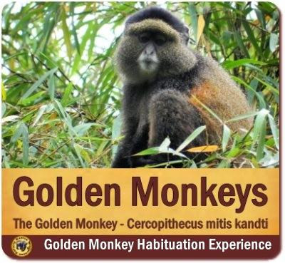 The Primate Habituation Experiences in Uganda give More than normal Treks
