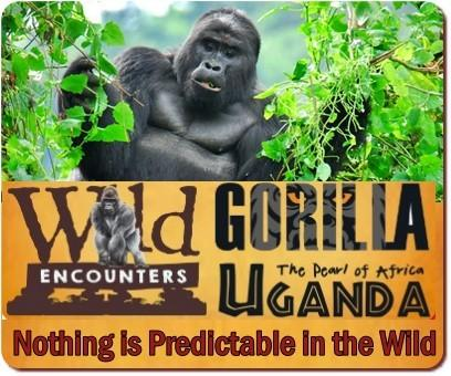 5 Day Luxury Fly-In Gorilla Trekking and Wildlife Safari