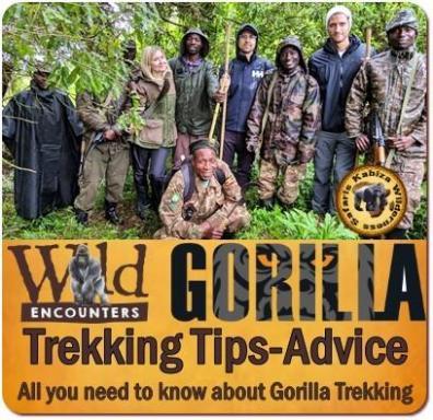 Best Gorilla Trekking Safaris in Mgahinga Gorilla Park in Uganda